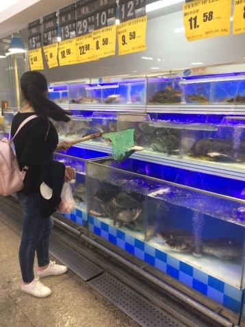 Delicias de un supermercado moderno chino que incluyen sapo, toruga y peces.